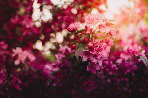 pink green and purple flowers during daytime